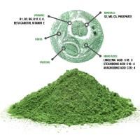 Chlorella pulver - økologisk